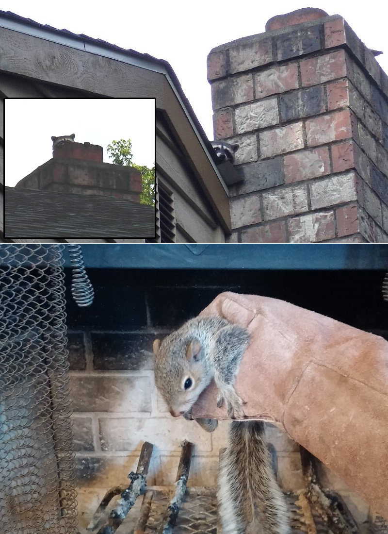 Animal in the Chimney - What to Do - Stuck in Chimney Cavity