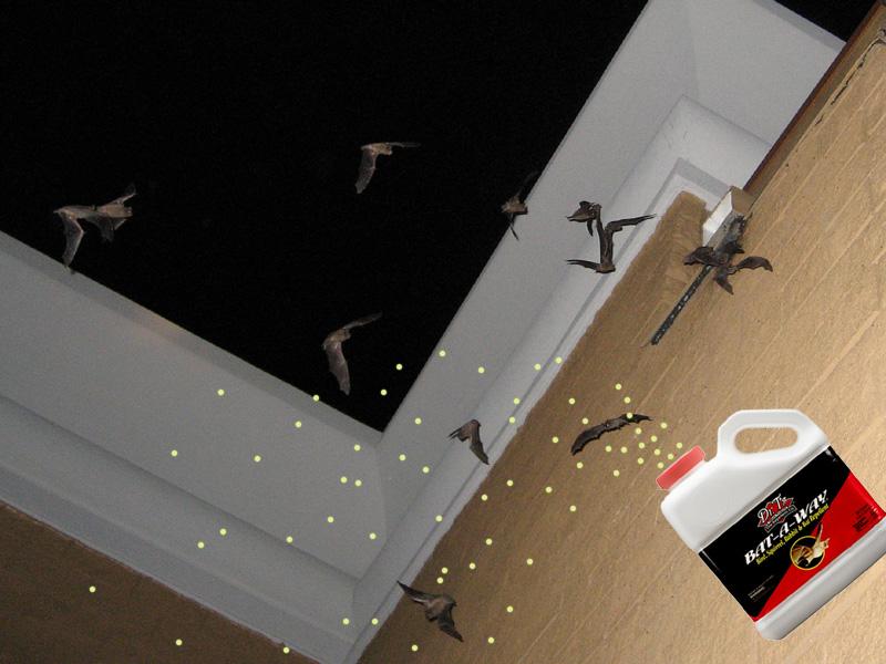 Bat Repellent Home Remedy Homemade Ftempo