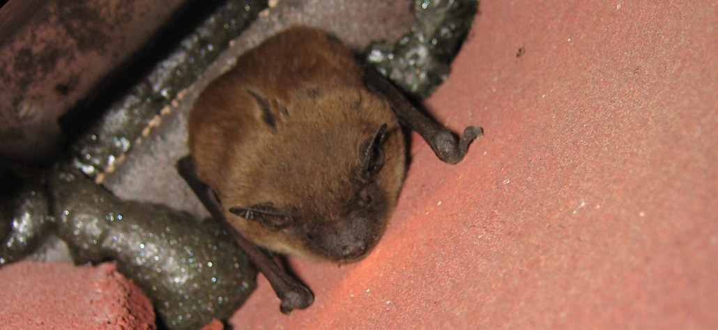 Will A Bat House Prevent Bats In Your Home