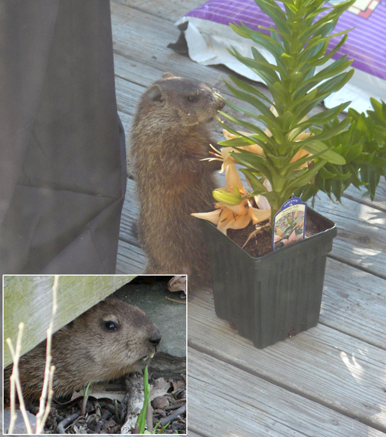 Animals living under a deck porch or shed sciox Image collections