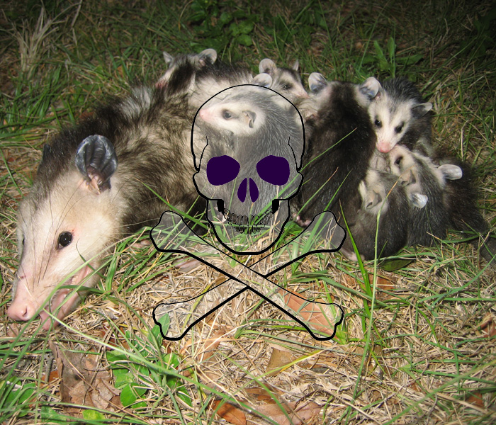 Opossum Poison Does It Work Is It Legal