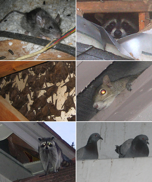 Scratching Sounds in the House, Attic, Walls, Day or Night