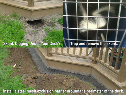 How To Get Rid Of Skunks In Yard Or Under House Steps