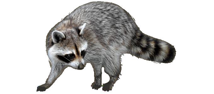 Wildlife Removal Usa