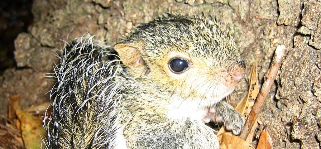 Squirrel Funnels