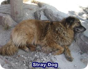 Getting Rid Of A Stray Dog